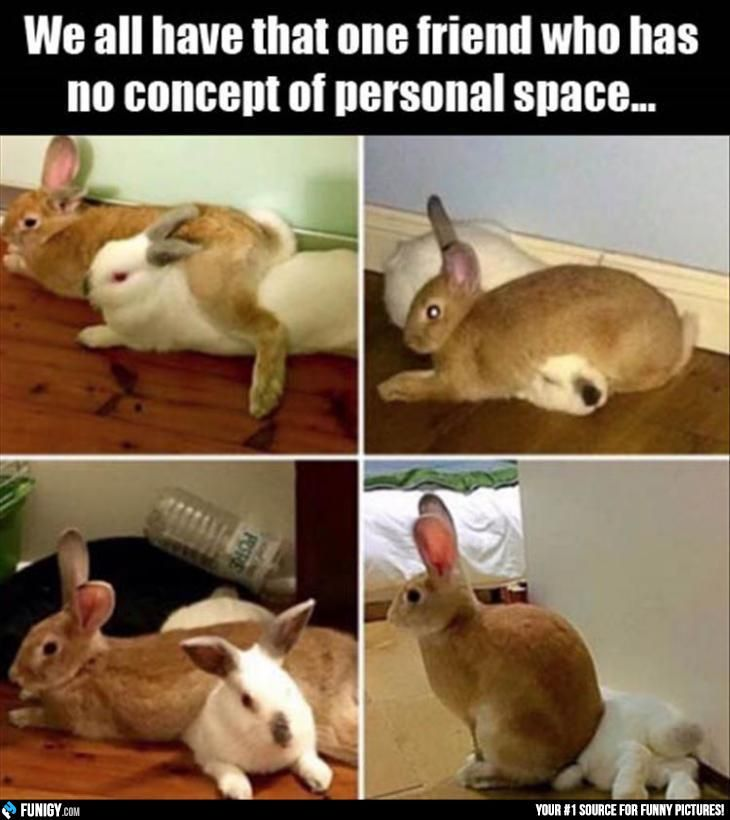 We All Have That One Friend Who Has No Concept Of Personal Space Funigy Com New Funny Pictures And Hilari Funny Animal Pictures Funny Animals Funny Bunnies