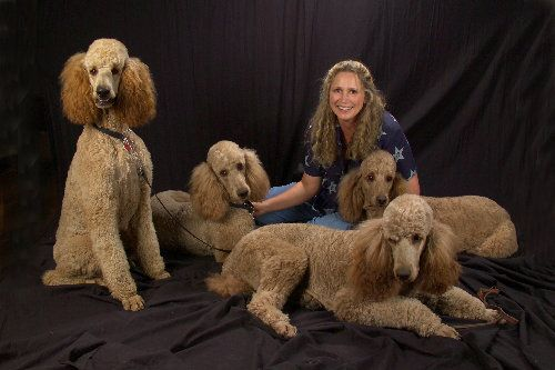 Royal Or Imperial Poodles The Largest Size Of Poodle And