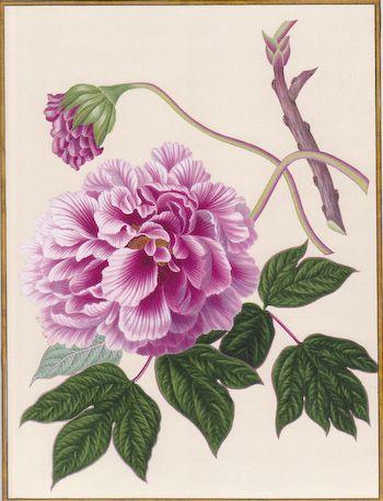 delphinium bouquet - Cerca con Google
