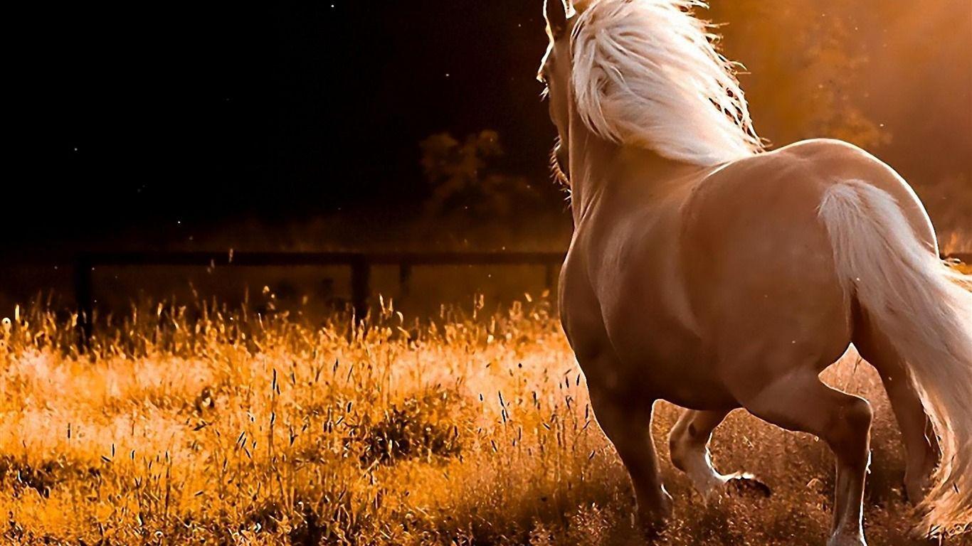 Course De Chevaux Animale Photographie Fond D Ecran 1366x768 Fond D Ecran Telecharger Mooie Paarden Paarden Paard Foto S