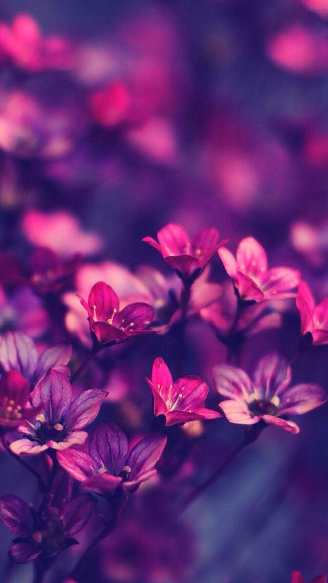 Purple Symphony wallpaper