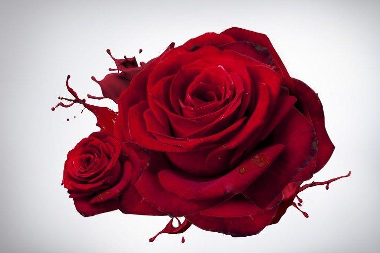 Red Roses Flower Wallpaper Red Roses Wallpapers Pinterest