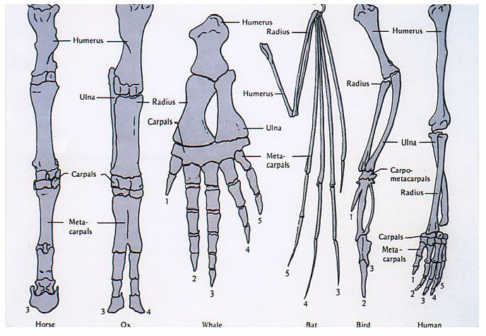 1000+ images about Anatomy on Pinterest   Heat Treating, The Skin ...