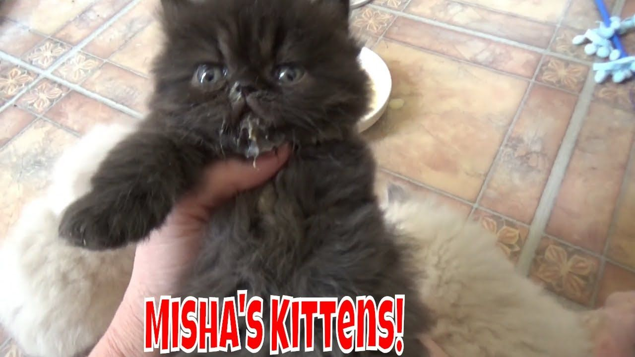 Misha S Kittens Are 5 Weeks Old Darn Ringworm Kittens Kitten Care Pets