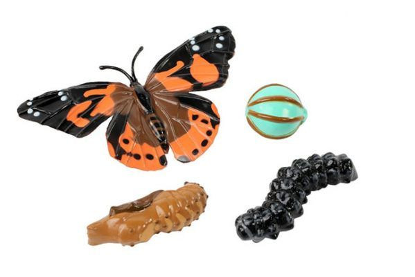 Lebenszyklus Schmetterling (Distelfalter) als Modell, Hagemann ...