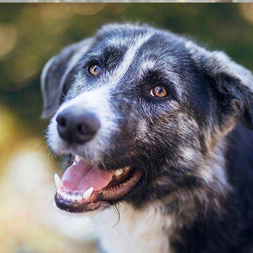 Peter Pan Adoptiert Hundehilfe Hunde Vermittlung Hunde In Not
