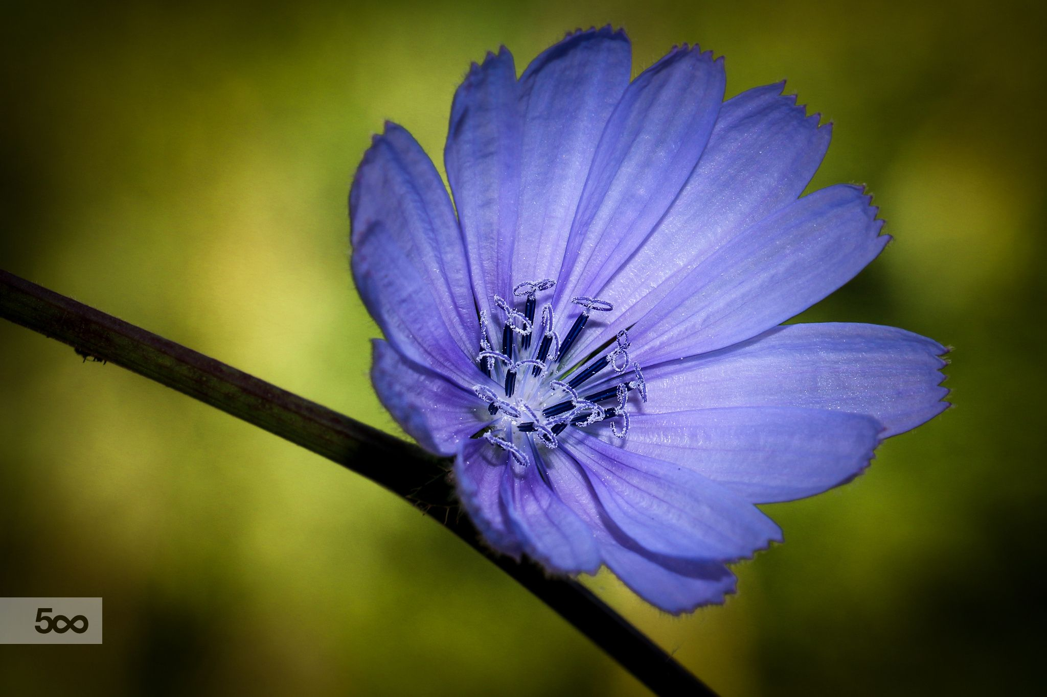 un fiore by stefano giacomini on 500px
