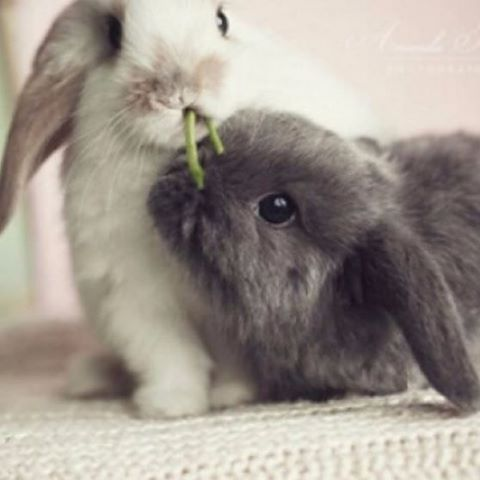 #bunny #photooftheday #cute #petstagram #supercute #tagforlikes #animal #photooftheday #cats #instagood