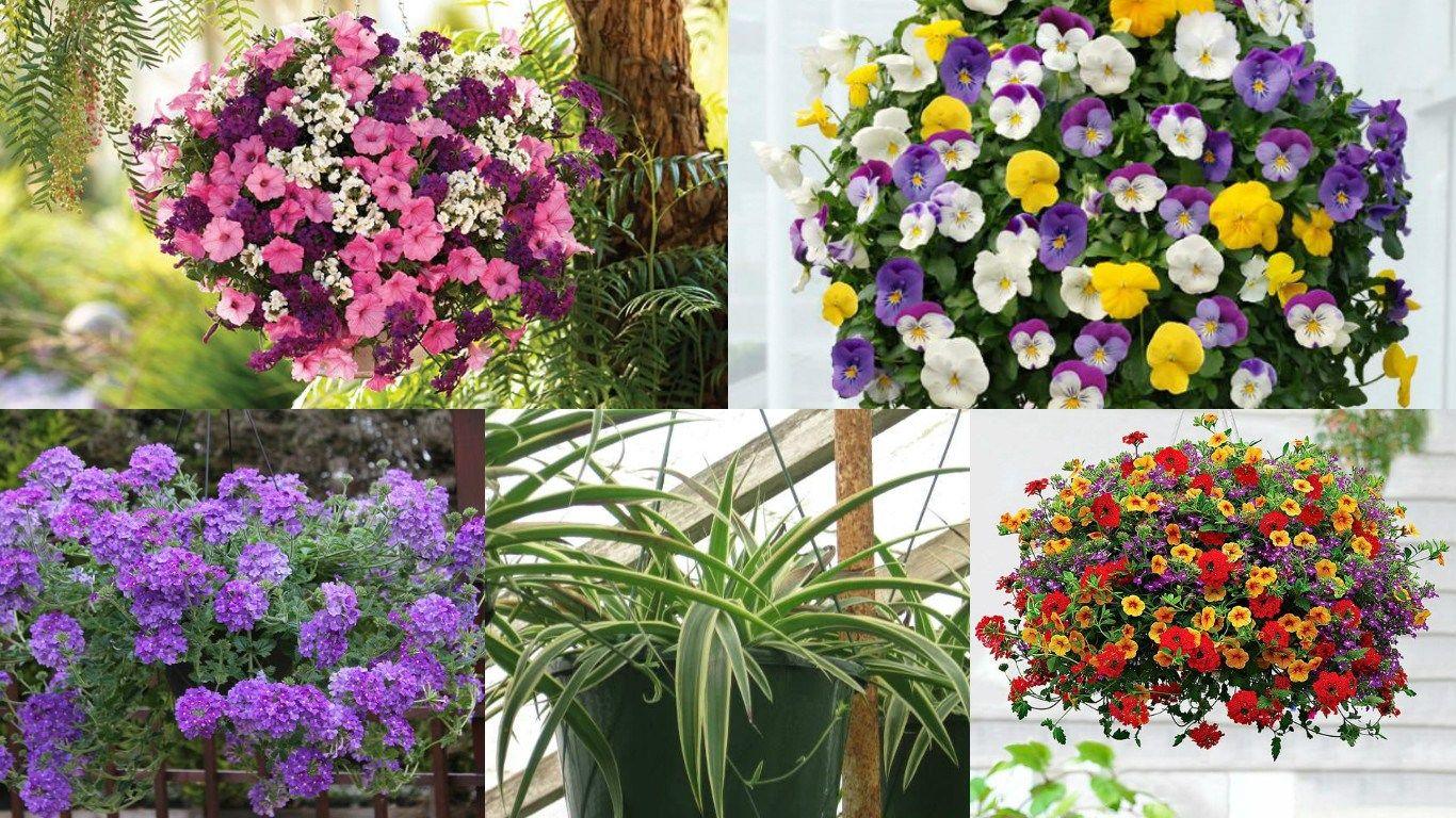 18 piante ideali per la coltivazione in vasi appesi Vasi