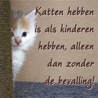 spreuken katten SPREUKEN | humor spreuken katten