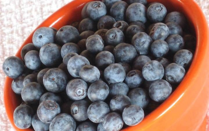 Blueberries Help Prevent Dementia and Graying Hair, etc