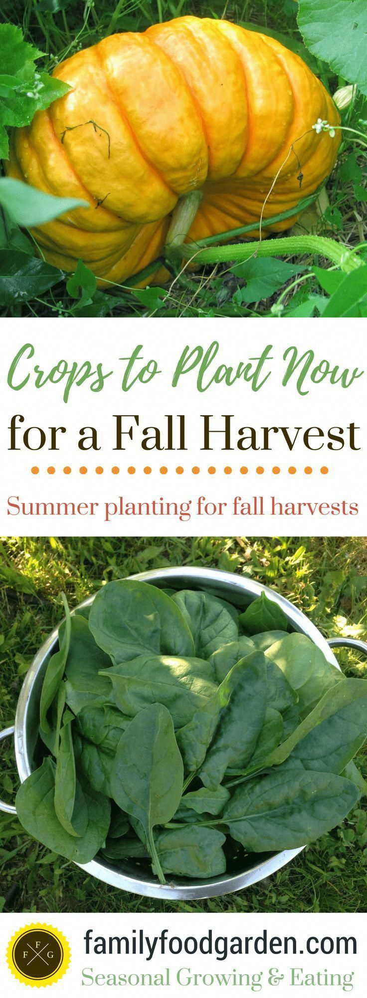 30 Summer Crops to Plant for a Fall Harvest