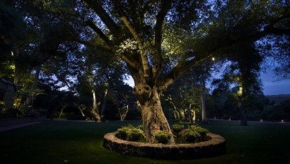 Accent lights12v landscape lighting kichler lighting tree reaching for the stars with kichler landscape lighting mozeypictures Image collections