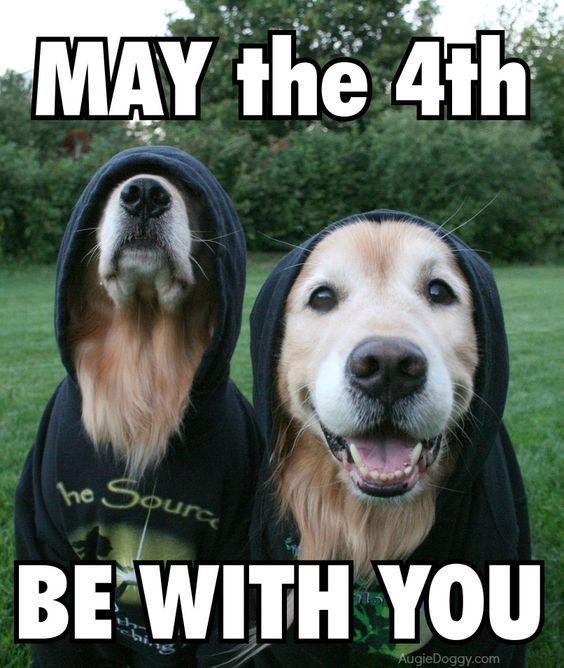 Happy Star Wars Day Funny Animals Happy Star Wars Day Dogs Golden Retriever