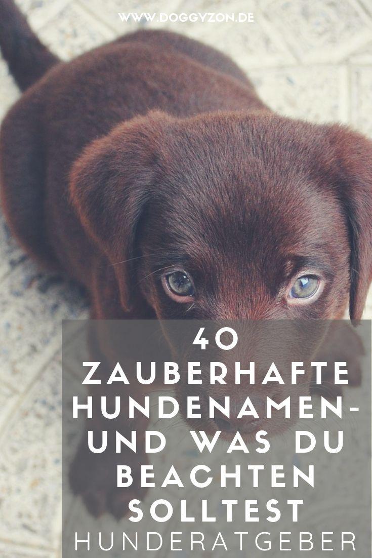 40 beliebte & außergewöhnliche Hundenamen & Tipps zur