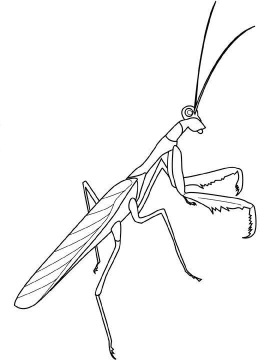 Ausmalbild Insekten Insekten Auf Kids N Fun De Auf Kids N Fun Sie Finden Immer Die Besten Malvorlagen Zuerst Insekten Ausmalen Ausmalbilder