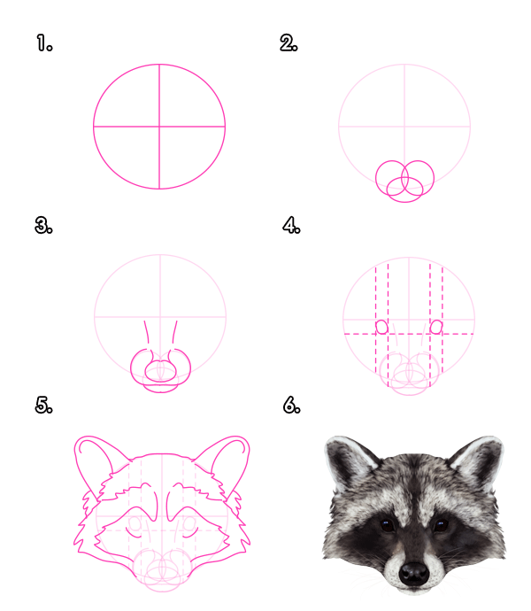 how to draw animals red pandas and raccoons tuts design illustration tutorial