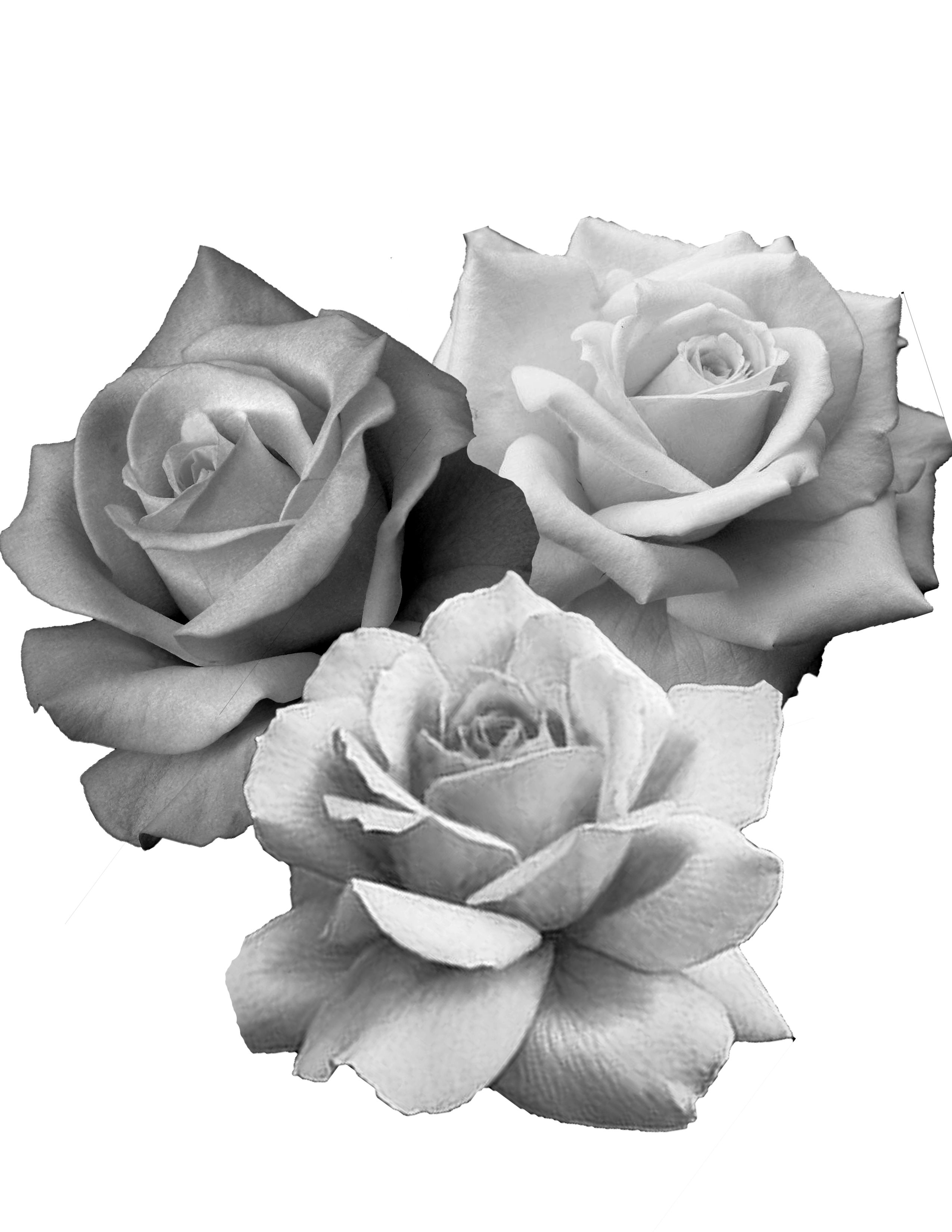 Pin by emmanuel on tattoo ideas pinterest dessin rose tatouage and rose - Dessin de rose ...