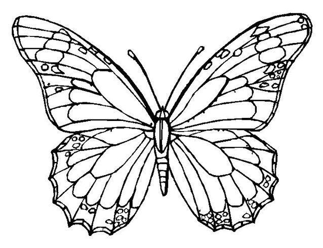 Monarch Butterfly Coloring Page Coloring BookADULT COLORING