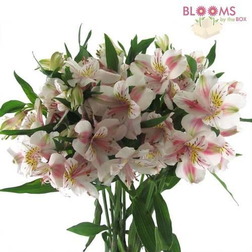 Alstroemeria White Diy Wedding Flowers Wedding Flowers Wedding Floral Centerpieces