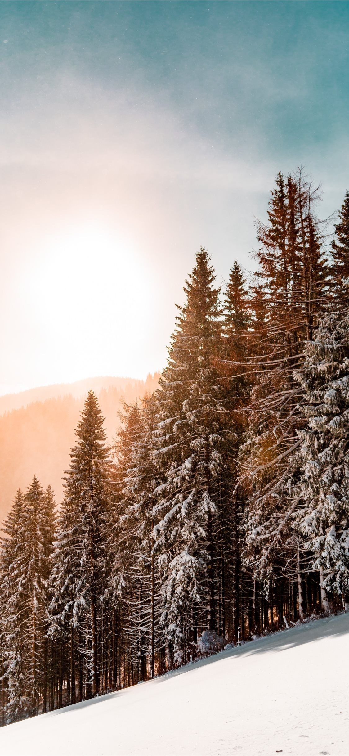 Free Download The Green Pine Trees On Inclined Snow Mountain Wallpaper Wallpaper Beaty Your Iphone Snow Wallpaper Iphone Forest Wallpaper Nature Wallpaper