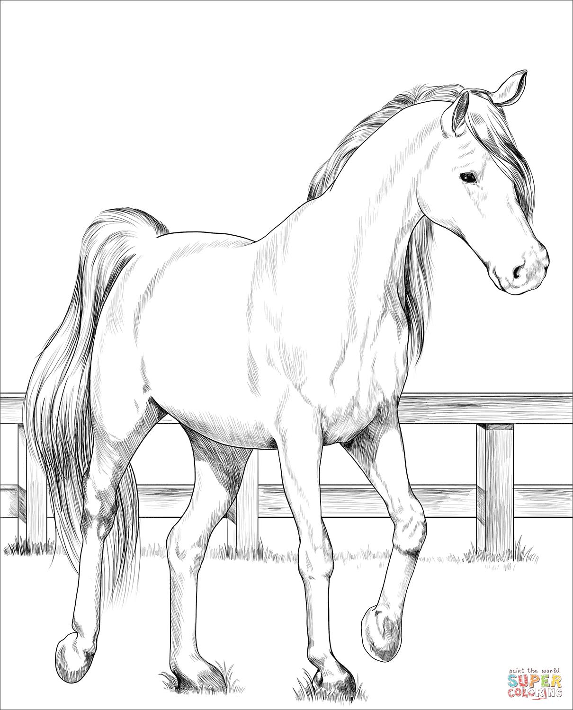 Supercoloring Horse Pics