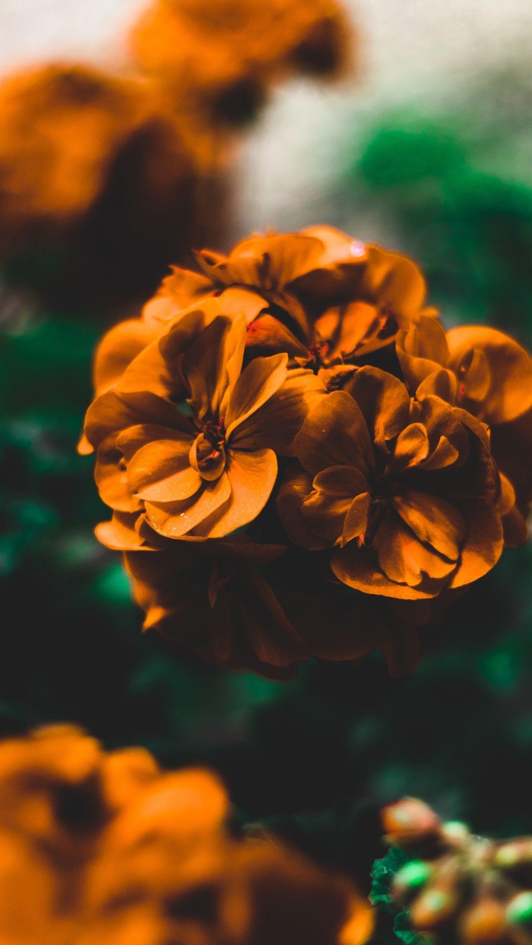 خلفيات ورود جميلة جدا Flower Iphone Wallpaper Wallpaper Iphone Wallpaper