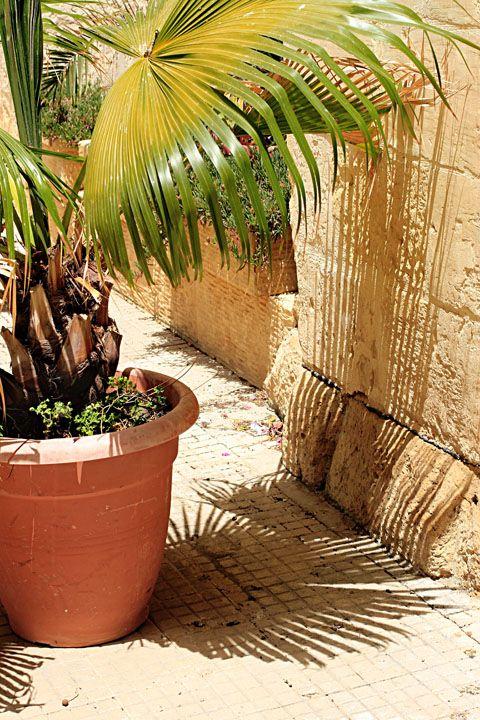 palm casting interesting shadows!