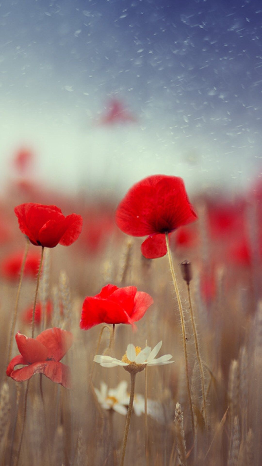 Fantasy Poppy Flower Field Plant Blur Iphone 6 Wallpaper Iphone 6 Wallpaper Backgrounds
