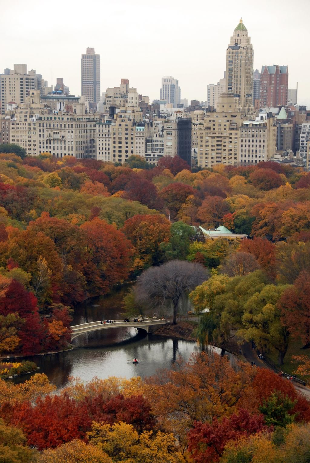 Central Park on in 2020 Autumn in new york, Beautiful