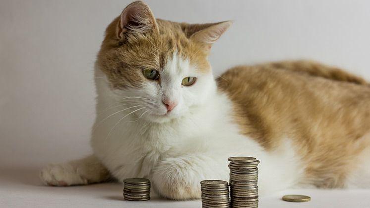 #Tier #Magazin: #Katzensteuer - die etwas andere K-Frage - https://www.tier-magazin.com/802-katzensteuer-die-etwas-andere-k-frage.html