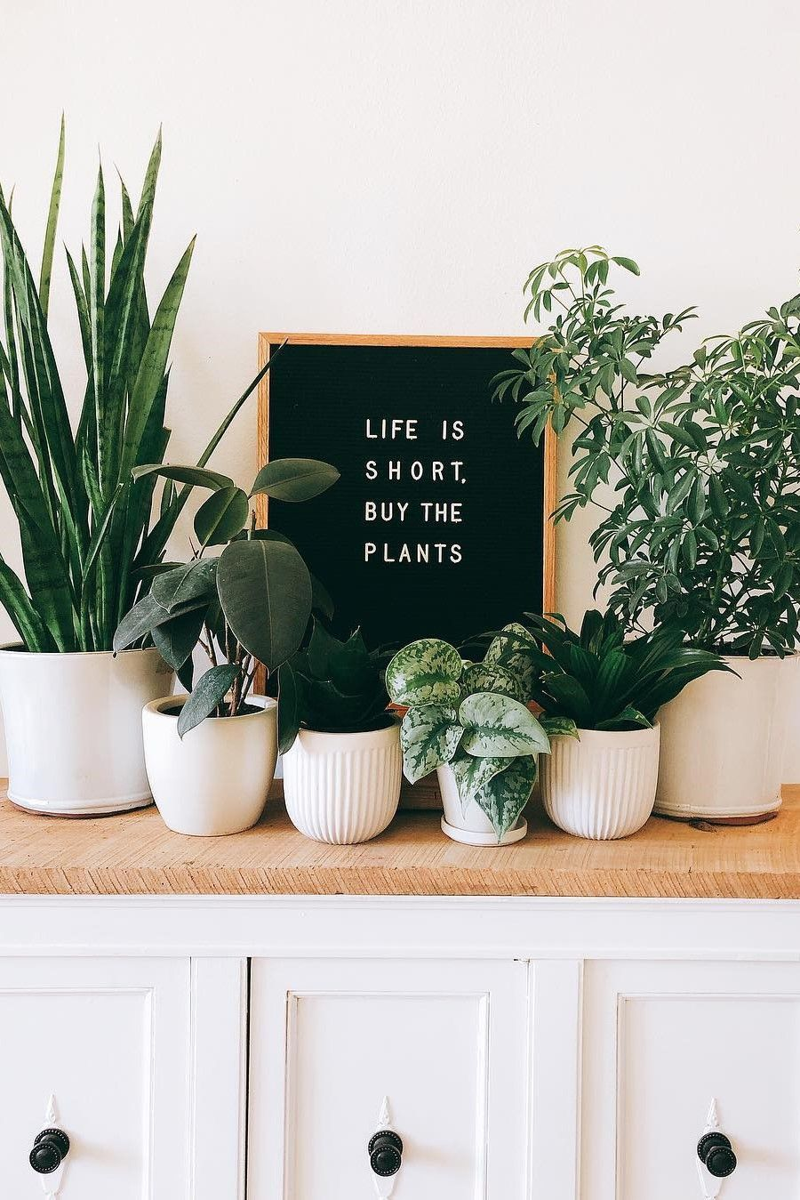 These Letter Boards With Plant Quotes Speak To Us On A Spiritual Level In 2020 With Images