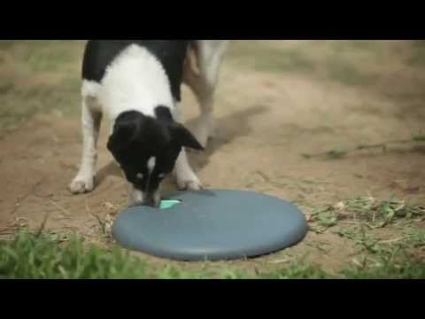 PETLIFE Play Systems #Purina #dogs #cats