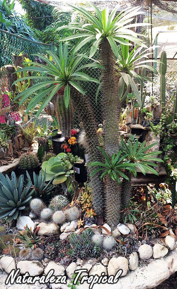 Desierto hermoso para la decoraci n en nuestro jard n for Decoracion de jardines con plantas