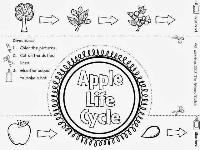 FREE Apple Life Cycle Crown. Easy to make. Kids look cute