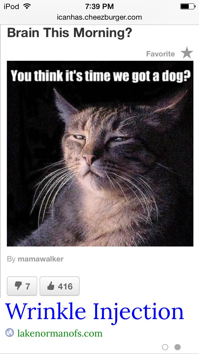 It Is So Funny I Couldn T Stop Laughing Funny Cat Memes Cats Funny Cute Cats
