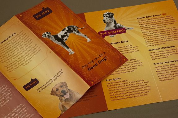 Dog Trainer Brochure Template A Dog Training School Could