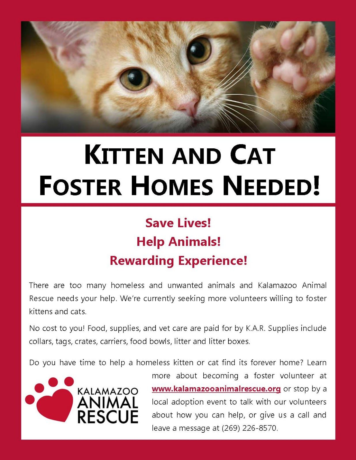 Kitten And Cat Foster Homes Needed Foster Home The Fosters Kittens
