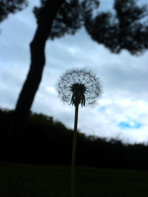 Sognare Fiori Gialli.Pin De Maureen Muhlestein En Nature Dandelion Fields Diente De