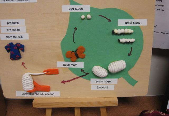 Silkworm life cycle project