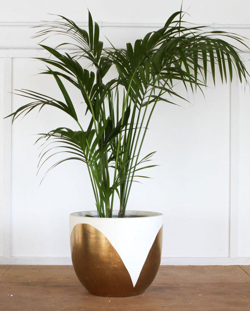 White Gold Plant Pot Pop And Scott Indoor Plant Pots Plants