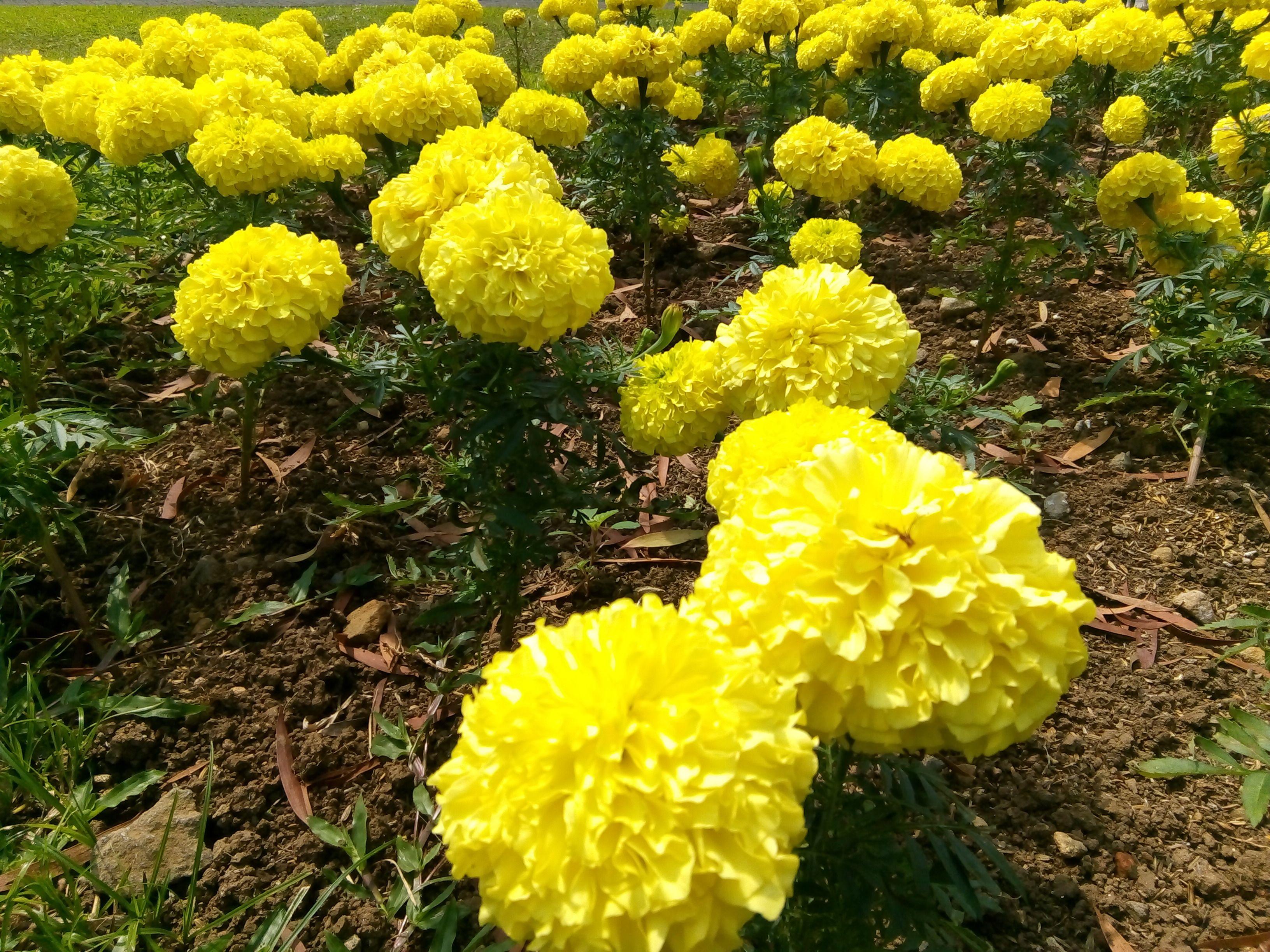 Pin Oleh Tono Agus Di Taman Bunga Taman Bunga Bunga Taman