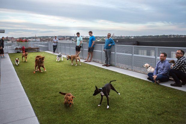 This Dog Friendly Apartment Building Has A Pup Park On The Roof Dog Friendly Apartments Dog Park Design Dog Playground