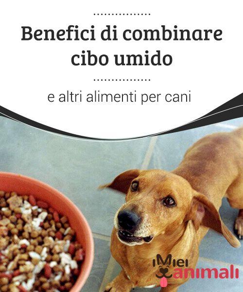 Benefici di combinare cibo umido e altri alimenti per cani Per ...