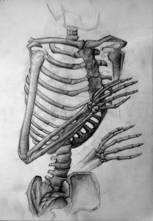 skelett bones torso bleistift anatomie mehr als. Black Bedroom Furniture Sets. Home Design Ideas