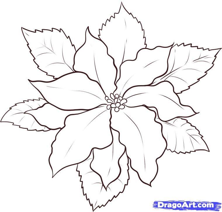 how to draw a poinsettia step 5 … | Riscos o patrones | Pinte…