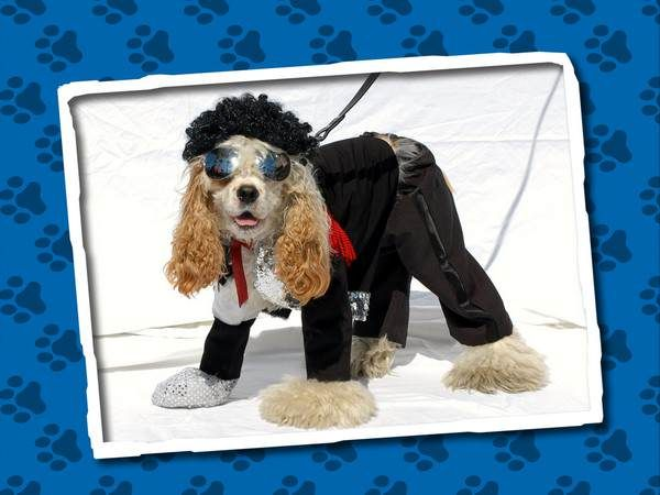how to win a dog halloween costume contest fidose of reality