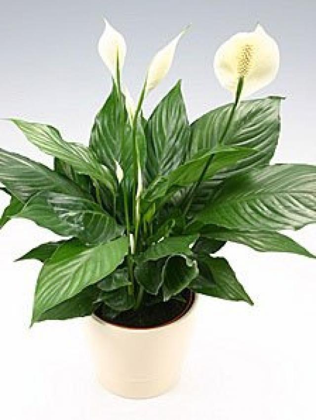 piante da interno - Cerca con Google | Pflanzen