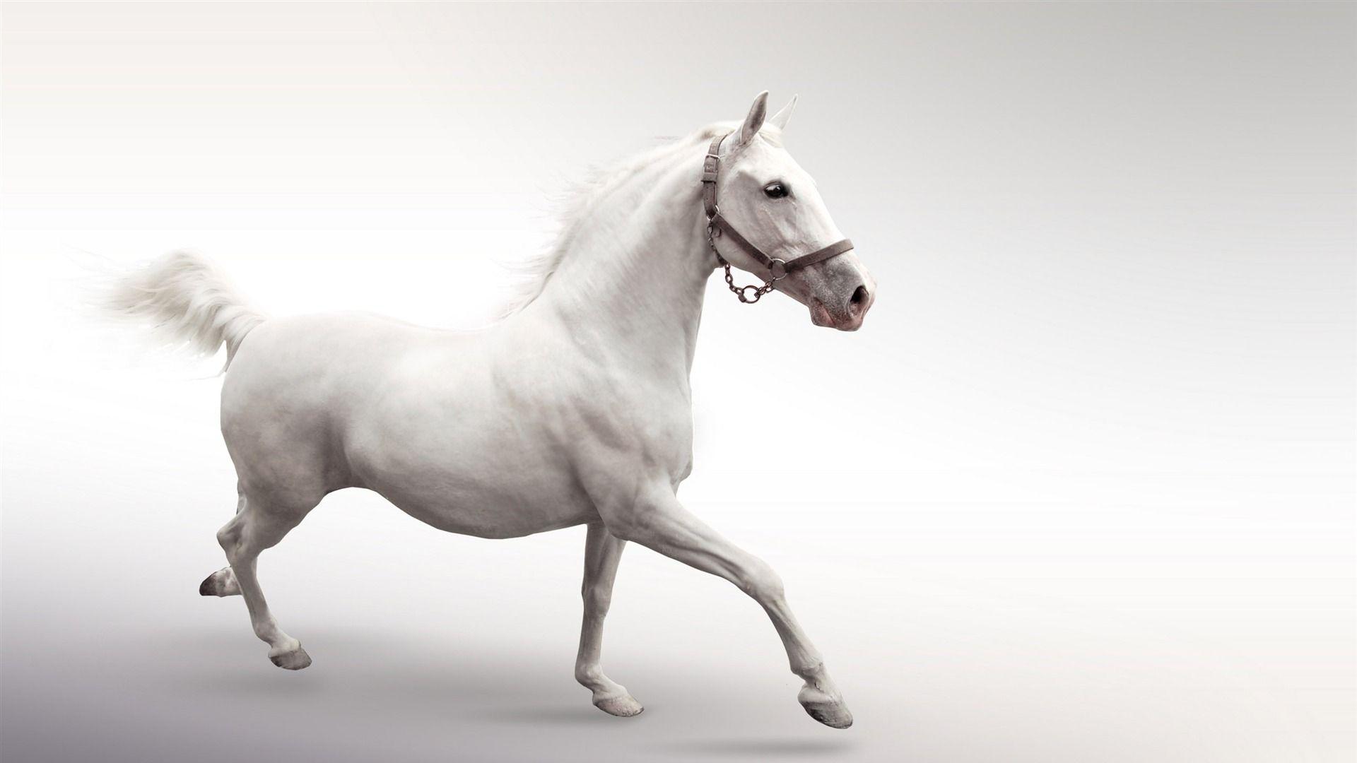 Must see Wallpaper Horse Pinterest - a9c323b456c181c3fb105fe5ae8ae07e  2018_883946.jpg