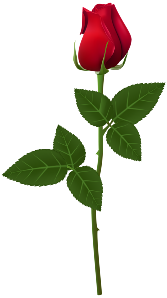 Rose Png Transparent Clip Art Image Beautiful Rose Flowers Single Flower Red Rose Flower